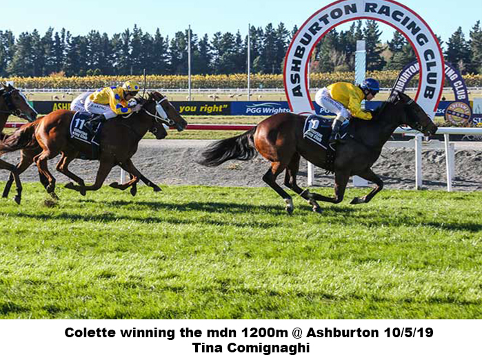 Colette winning the mdn 1200m Ashburton 10-5-19 – Tina Comignaghi